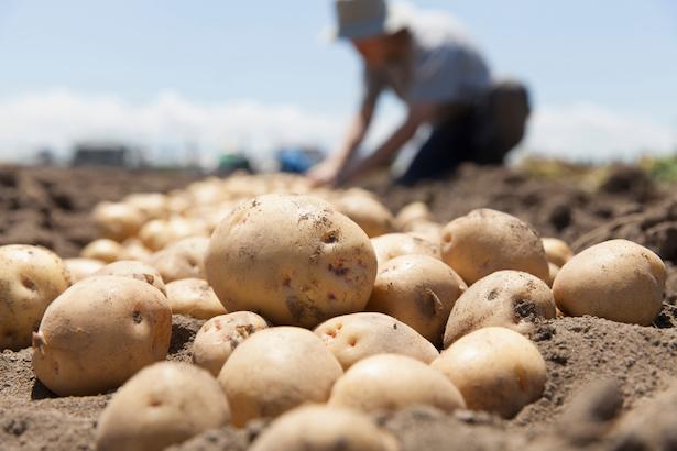 Trucs et astuces avec de la pomme de terre